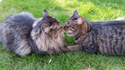 Catastrophe & Katmandu - Brotherly Love!
